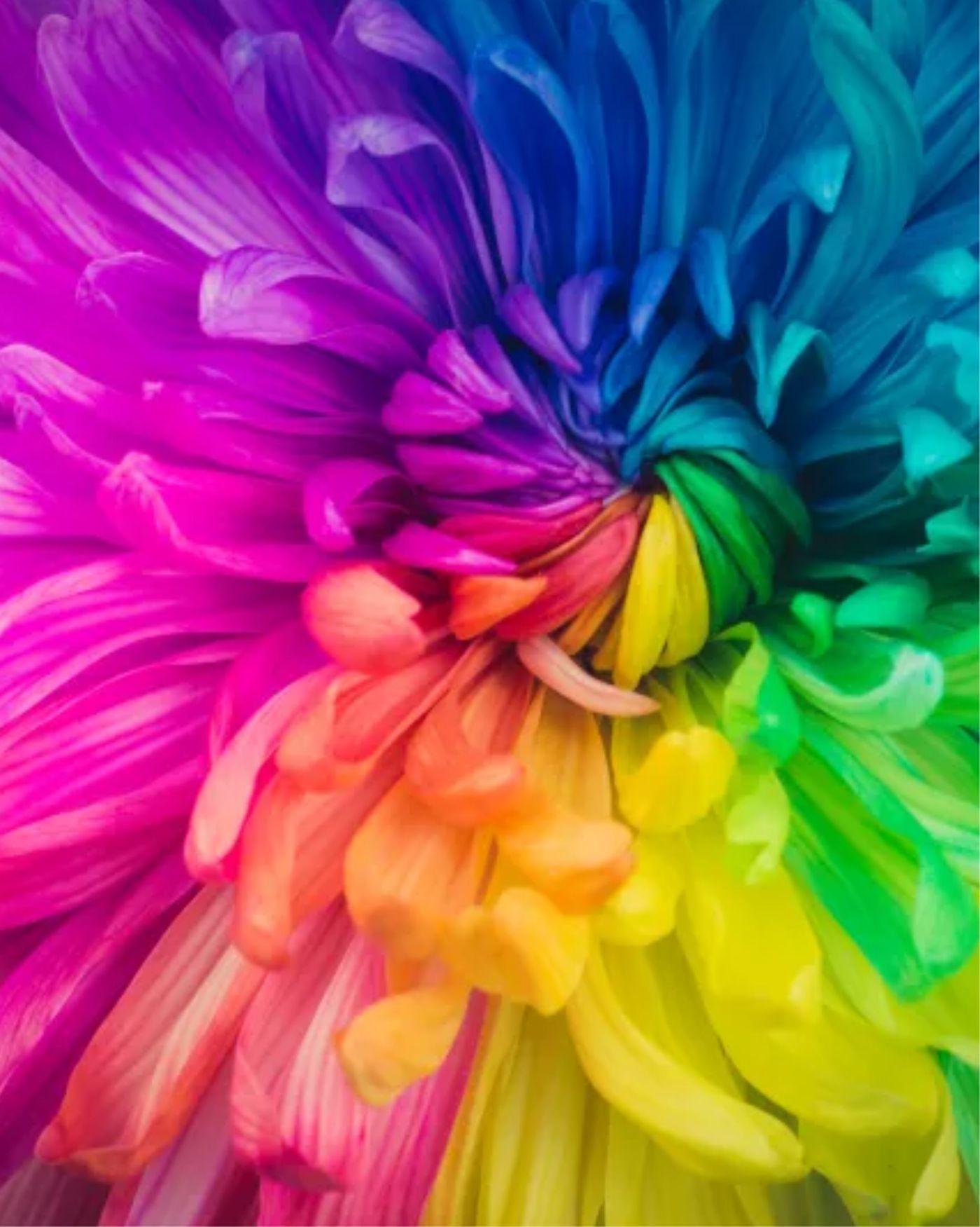 Standard farver